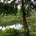 Lush Green At Starvation Lake by Adam Jewell