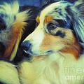 Lucky Dog's Life by Jutta Maria Pusl