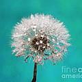 Lucky Wish by Krissy Katsimbras