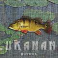 Lukanani by Mark Khan