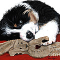 Lullaby Berner And Bunny by Liane Weyers