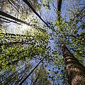 Lumberjack Heaven by Debra and Dave Vanderlaan