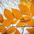 Luminescent Leaves by Bill Pevlor