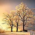 Luminous - Blue Ridge Winter Sunset by Dave Allen