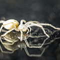 Luminous Spider by Carl Engman