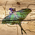 Luna Moth Worm Wood  by Randall Branham