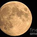 Lunar Mood by Mary Mikawoz