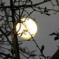 Lunar Still Life 2 by Laura Yamada