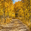 Lundy Canyon Pathway by Mimi Ditchie