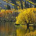 Lundy Lake In Fall by Frank Lee Hawkins