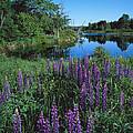 Lupin And Lake-v by Tom Daniel