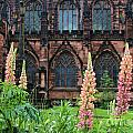 Lupines At Chester Cathedral 6805 by Jack Schultz