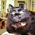 Lura Leigh Kitty by Alice Gipson