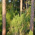 Lush Forest by Kim Chernecky