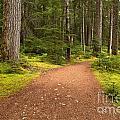 Lush Green Forest At Cheakamus by Adam Jewell