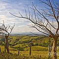 Lush Land Leafless Trees 2 by Madeline Ellis