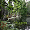 Lush Swamp Vegetation by Christiane Schulze Art And Photography