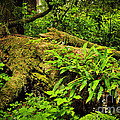 Lush Temperate Rainforest by Elena Elisseeva