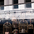 Lv Gilded Cage Bags by Rick Piper Photography