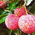 Lychee Fruit  by Jeelan Clark
