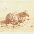 Lying Sheep, Ernst Willem Jan Bagelaar by Quint Lox