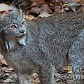Lynx Eyes by Bianca Nadeau