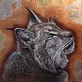 Lynx Face by Susana Falconi