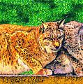 Lynx by George Rossidis