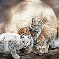 Lynx Moon by Carol Cavalaris