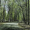 M119 Tunnel Of Trees Michigan by LeeAnn McLaneGoetz McLaneGoetzStudioLLCcom