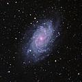 M33--the Triangulum Galaxy by Alan Vance Ley
