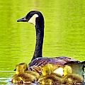 Ma And Kids by Art Dingo