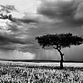 Maasai Mara In Black And White by Amanda Stadther