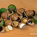Macadamia Nuts by Anthony Mercieca
