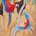 Macaw Claylick by Patricia Beebe