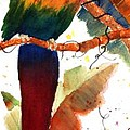 Macaw Feathers by Patricia Novack