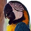 Macaw Head Study by Maria Urso