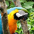 Macaw by Michael Caron
