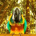 Macaw Parrot by Anna Om