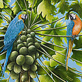 Macaw Parrots In Papaya Tree by Mary Ann King