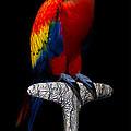 Macaw... by Tim Fillingim