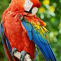 Macaws Of Color31 by Rob Hans