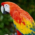 Macaws Of Color33 by Rob Hans
