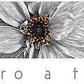 Macro A Trois Poster by Mike Nellums
