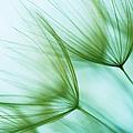 Macro Dandelion Seed by Jasmina007
