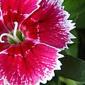 Macro Flower by Pete  OConnor