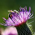 Macro Micro Bee by Art Dingo
