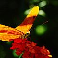 Macro Of An Orange Butterfly by Jeff Swan