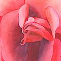 Macro Rose by Ken Powers