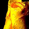 Macro Yellow Rose 2 by Guy Pettingell